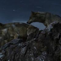 Le-Dernier-Loup-James-Horner-musique-bo