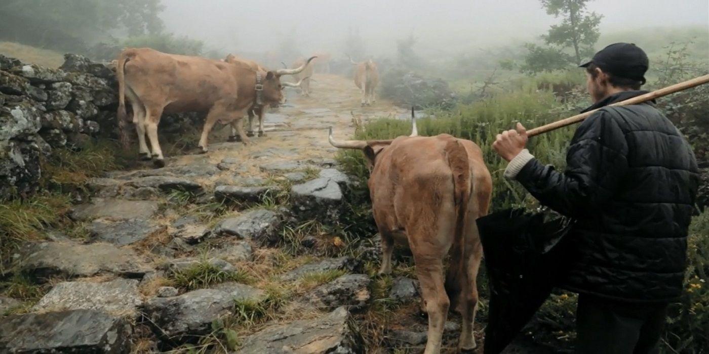 volta-à-terra-film-critique-daniel-vaches