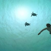 la-tortue-rouge-michael-dudok-de-wit-critique-film