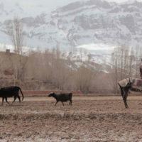 wolf-and-sheep-shahrbanoo-sadat-film-critique