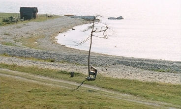 sacrifice-andrei-tarkovski-critique-film-erland-josephson-allan-edwall