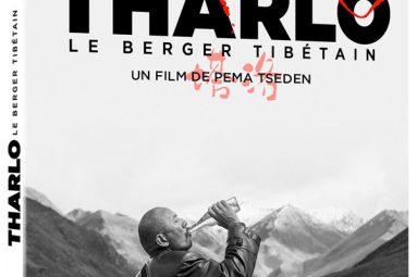 tharlo-le-berger-tiberain-sortie-dvd-pema-tseden-shide-nyima